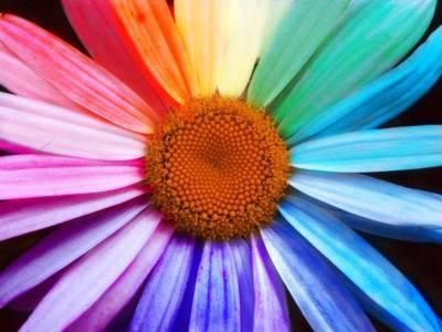 2006 6 gigazine gigazine - Immagini passover a colori ...