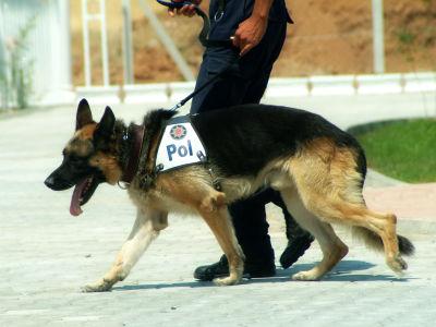 盲導犬の仕事| 日本盲導犬協会 -