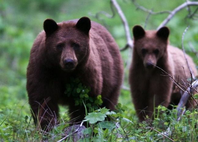 グレイシャー国立公園の画像 p1_8