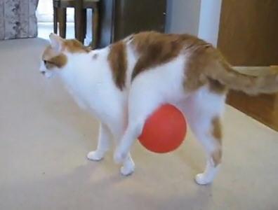 Cat Balloon Static
