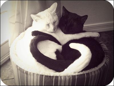 「白と黒 白猫」の画像検索結果