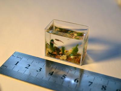 Gigazine for Mini poisson aquarium