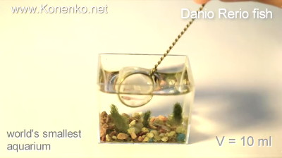 Created In Russia The World S Smallest Aquarium Where Small Fish