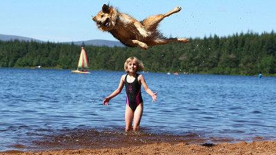 海外には犬にジャンプをさせてその高さを競う競技があり、現在の世界記録は... 世界記録レベルのジ