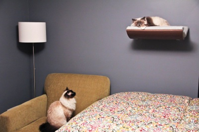 cat bedroom. It is possible to choose maple or walnut for wood part A bedroom cat bed  Curve Pet Bed sleeps with cats Photo