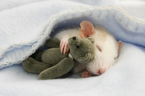 「寝る 動物」の画像検索結果