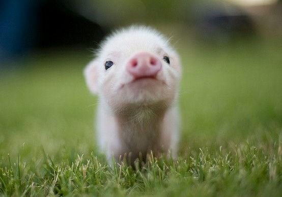 「動物 かわいい」の画像検索結果