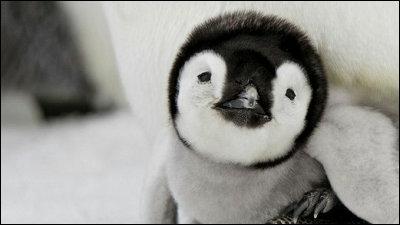 可愛い動物 画像