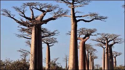 世界一の樹木やCMで有名な木など一度は見たい世界の巨木・奇木16種
