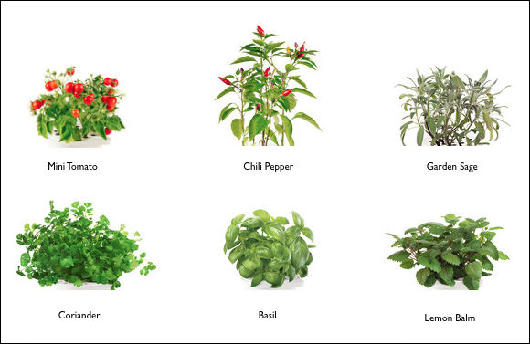 Smart Herb Garden Which Can Grow Herbs Even If The