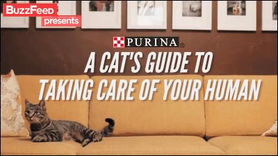 猫様が飼い主の人間の世話をするためのハウツーガイド