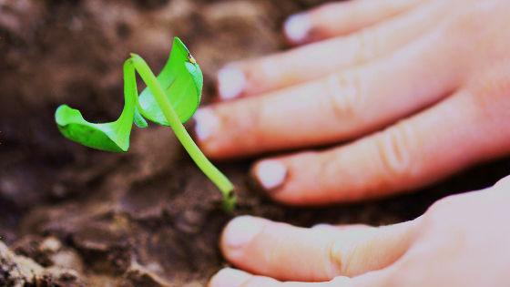 「成長する考え方」と「成長できない考え方」の違いが20年の研究で明らかに