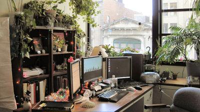 職場に観葉植物を置くだけで幸福度と生産性がアップ