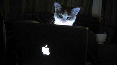 世界中のMacに感染中のマルウェア「iWorm」が数万台規模のボットネットを形成していることが判明