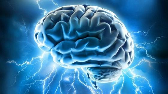 「 脳」の画像検索結果