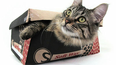 「シュレーディンガーの猫」をわかりやすくザックリ解説するムービー