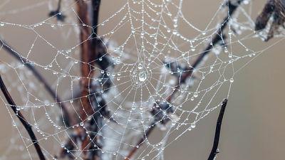 人工的にクモの糸の生成に成功、科学者の長年の夢が実現