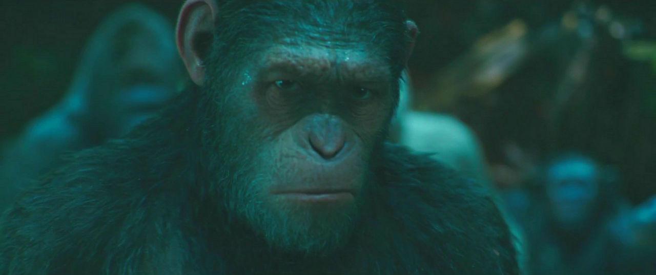 猿の画像 p1_25