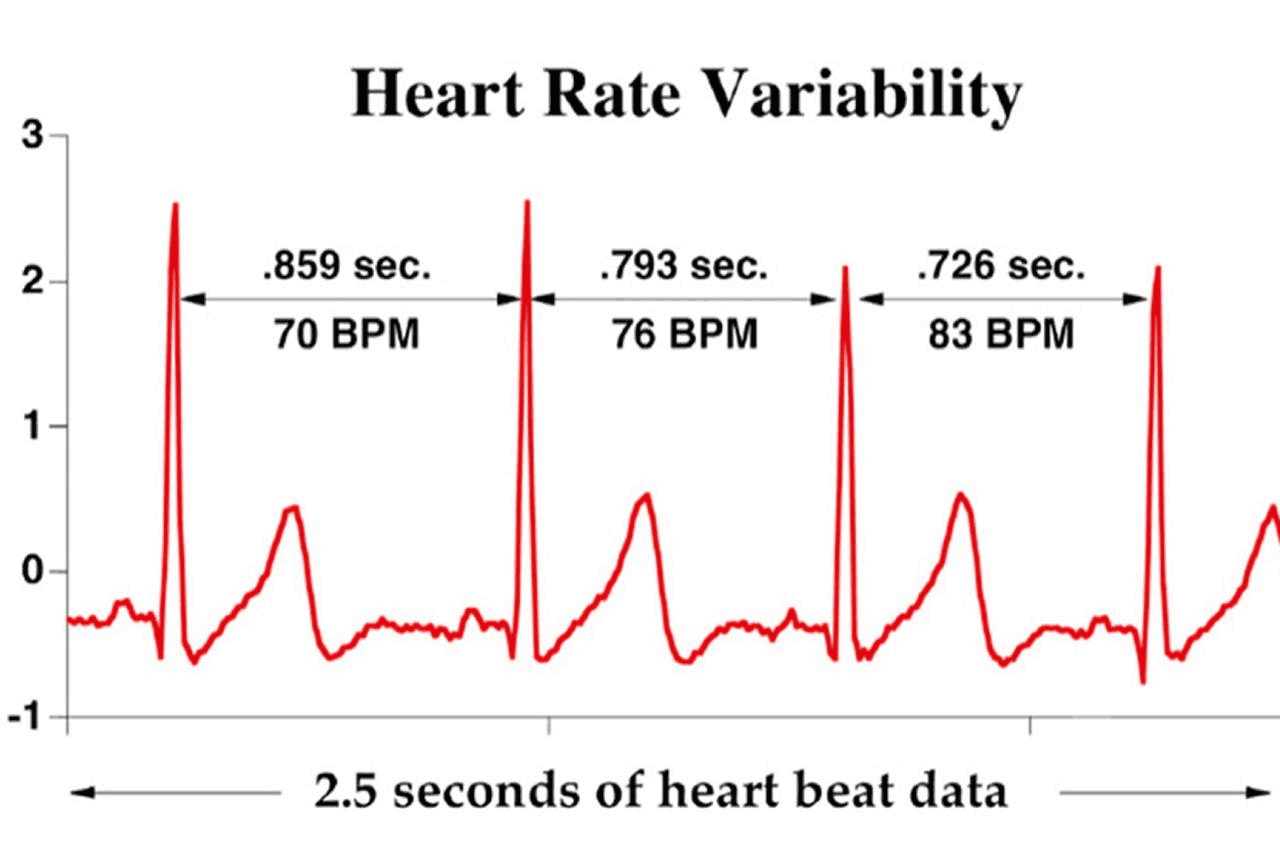 heart rate variability thesis