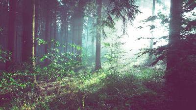木々は会話し複雑な社会生活を送...