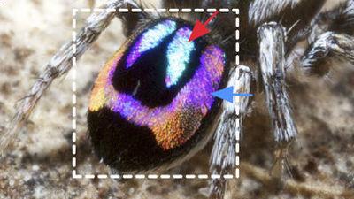 光の99.95%を吸収して真っ黒にしか見えない羽を持つ「スーパー