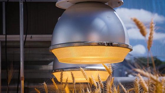 【食糧危機】LEDの光を使った栽培で、作物の成長速度を大幅に向上 小麦などを1年で6回も収穫できるようになることが判明 YouTube動画>2本 ->画像>10枚