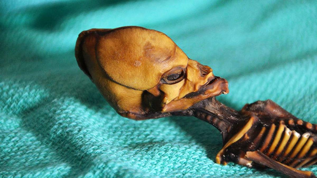 身長約15cmのエイリアンのミイラとされていた物の正体が判明