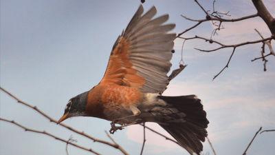鳥は「目」で地球の磁場を見て方角を判断している可能性が高い