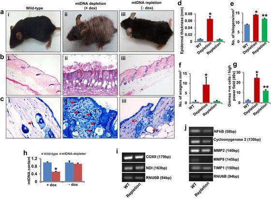 a03 m - 【ゲノム編集】遺伝子編集によってしわや抜け毛を解消し老化を止めることができるかもしれない[07/27]