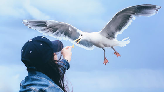 """Photo of Seagulls tend to prefer """"food held by humans"""""""