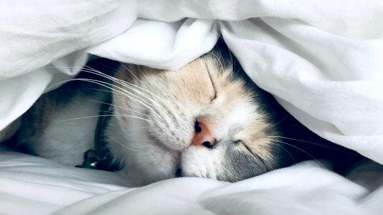 "Photo of ""Sleep"" is useful in fighting the new coronavirus, what is sleep that boosts immunity?"