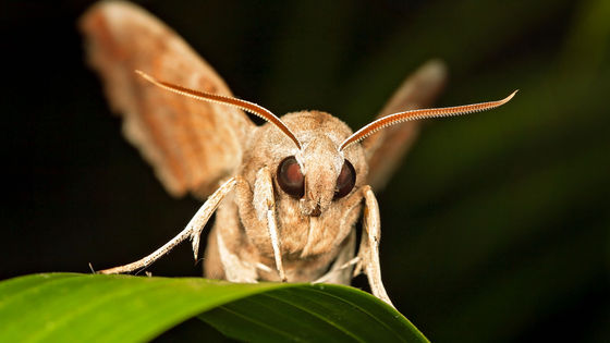 """Photo of It turns out that """"moths"""" play an important role as pollinators just like bees and butterflies"""