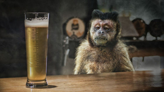"""Photo of Alcohol poisoning monkeys injured more than 250 people and sentenced to """"life imprisonment"""""""
