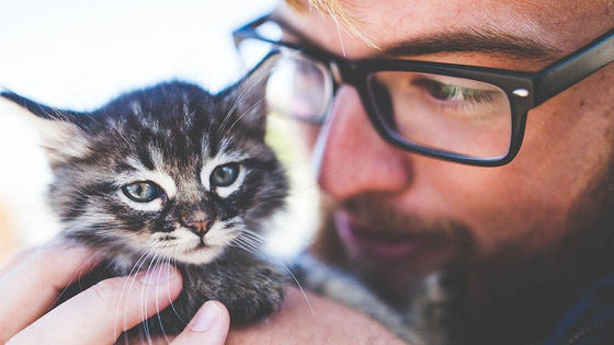 "Photo of It turns out that men who took pictures with cats are considered to be ""not attractive"""