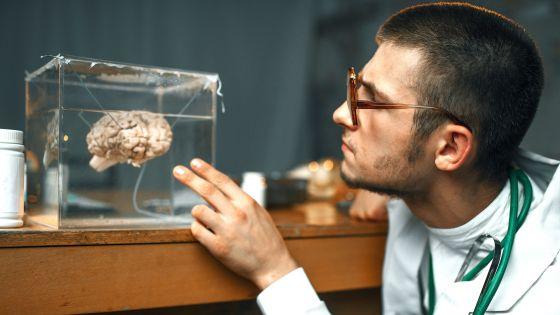 の 脳みそ サメ