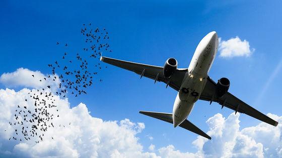 数千件のバードストライクを調査した「羽毛探偵」ロキシー・レイボーン
